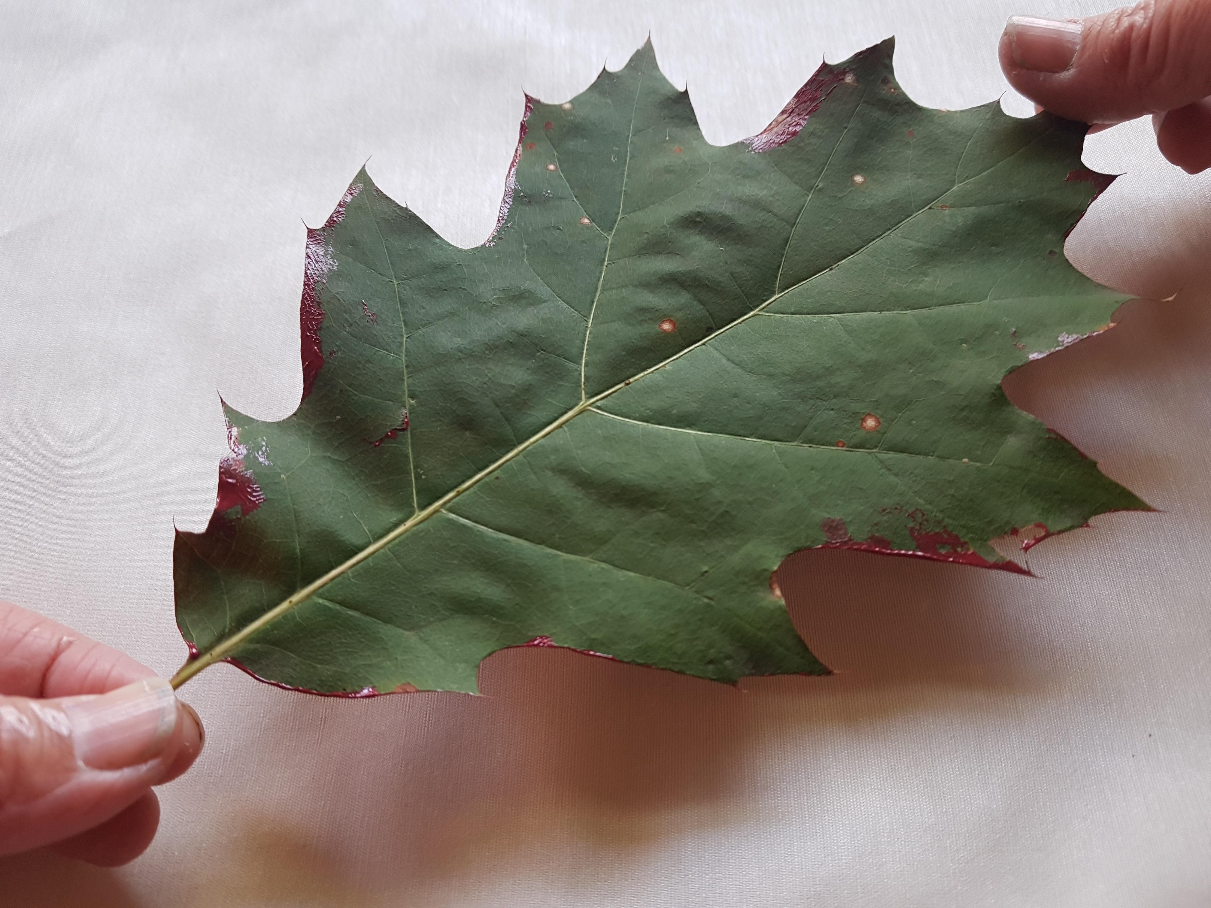 Printing leaf