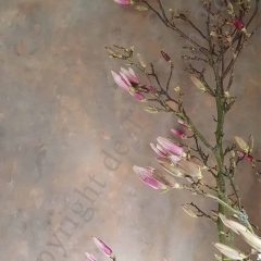 kaart magnolia